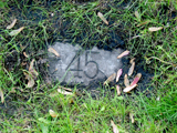 Faribault numbered grave markers